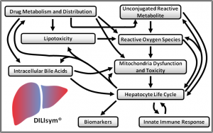 DILIsym - drug-induced liver injury flow chart